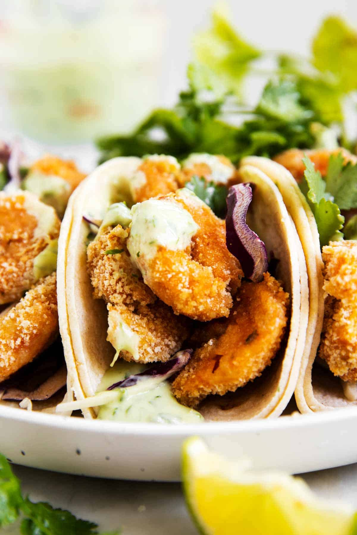 frontal view of shrimp taco on white plate